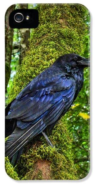 Muir Woods Raven 001 IPhone 5 / 5s Case by Lance Vaughn