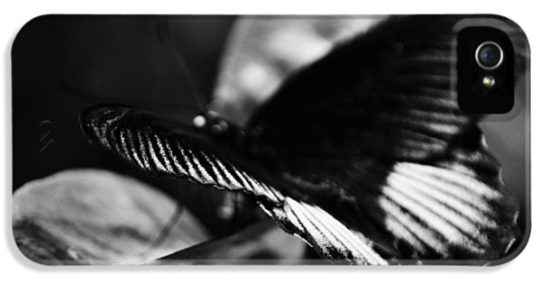 National Museum Of America History iPhone 5 Cases - National Butterfly Pavilion BW iPhone 5 Case by Kyle Hanson