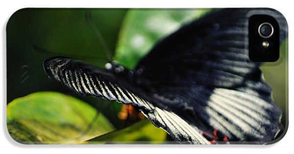 National Museum Of America History iPhone 5 Cases - National Butterfly Pavilion iPhone 5 Case by Kyle Hanson