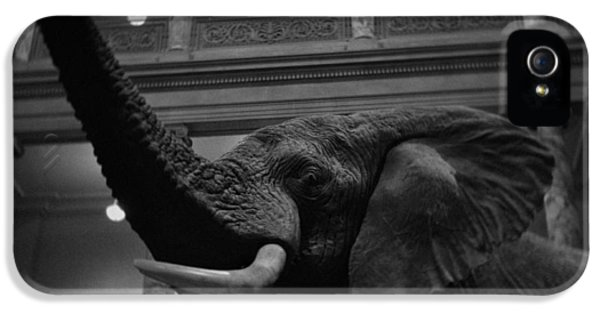 National Museum Of America History iPhone 5 Cases - National Museum of Natural History African Elephant BW iPhone 5 Case by Kyle Hanson
