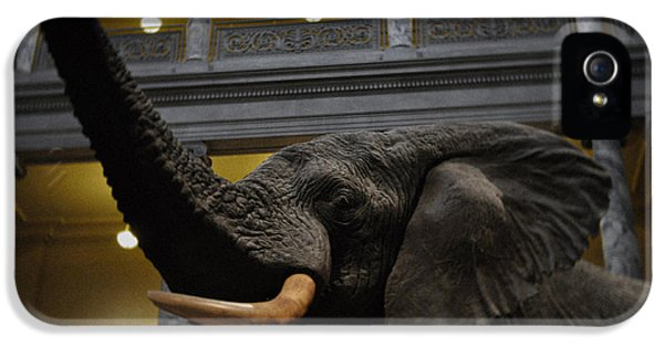 National Museum Of America History iPhone 5 Cases - National Museum of Natural History African Elephant iPhone 5 Case by Kyle Hanson