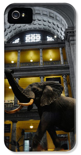 National Museum Of America History iPhone 5 Cases - National Museum of Natural History African Elephant Portrait iPhone 5 Case by Kyle Hanson