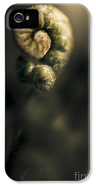 Springs Coil iPhone 5 Cases - New Fern iPhone 5 Case by Ryan Jorgensen