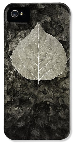 Contemplative iPhone 5 Cases - New Leaf on the Old iPhone 5 Case by Scott Norris