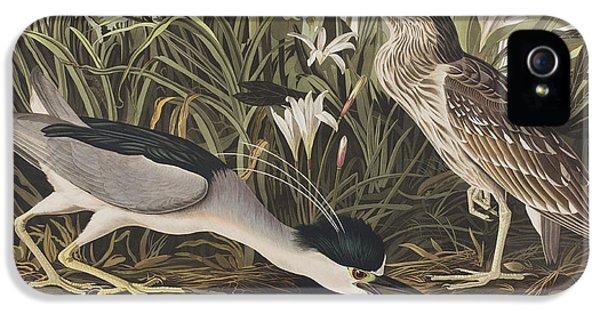 Night Heron Or Qua Bird IPhone 5 / 5s Case by John James Audubon