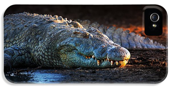 Nile Crocodile On Riverbank-1 IPhone 5 / 5s Case by Johan Swanepoel