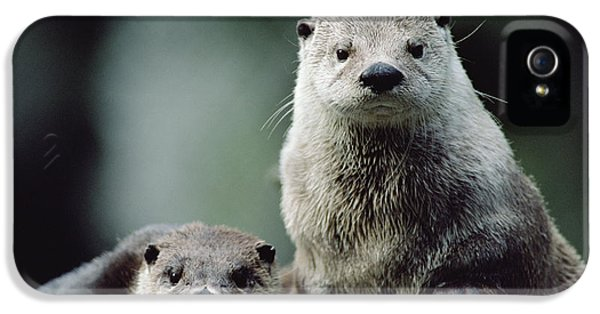 North American River Otter Lontra IPhone 5 / 5s Case by Gerry Ellis