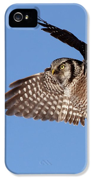 Northern Owl iPhone 5 Cases - Northern Hawk Owl iPhone 5 Case by Mircea Costina Photography