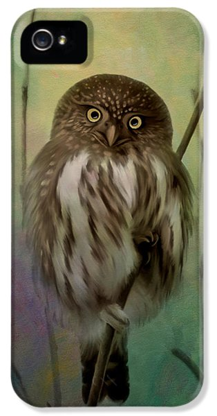 Northern Pygmy Owl  IPhone 5 / 5s Case by Beve Brown-Clark Photography