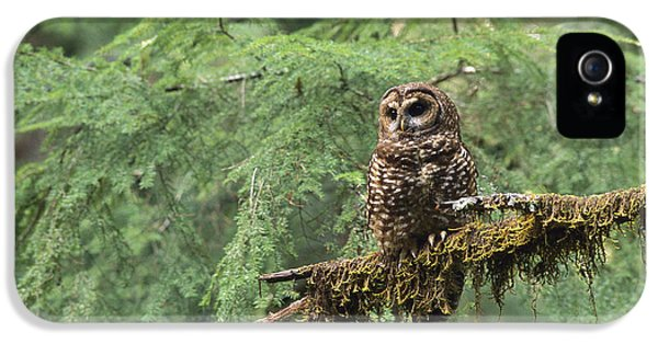 Northern Spotted Owl Strix Occidentalis IPhone 5 / 5s Case by Gerry Ellis