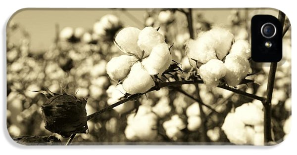 Agriculture iPhone 5 Cases - O Sweet Cotton iPhone 5 Case by Sean Cupp
