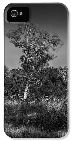 Farmland iPhone 5 Cases - Oak And Palm iPhone 5 Case by Marvin Spates