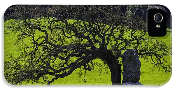 Oak Tree And Rock IPhone 5 / 5s Case by Garry Gay