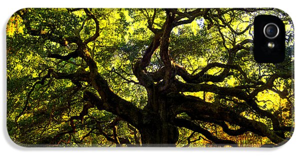 Angel iPhone 5 Cases - Old old Angel Oak in Charleston iPhone 5 Case by Susanne Van Hulst