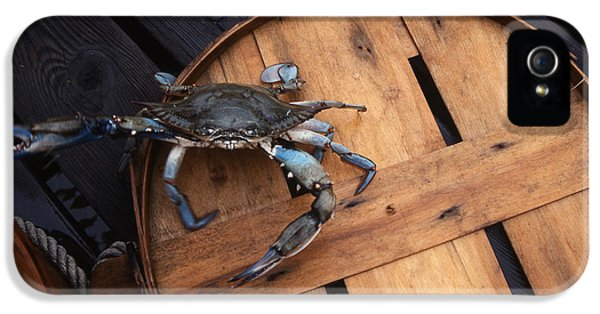 Crabbing iPhone 5 Cases - One Angry Crab iPhone 5 Case by Skip Willits
