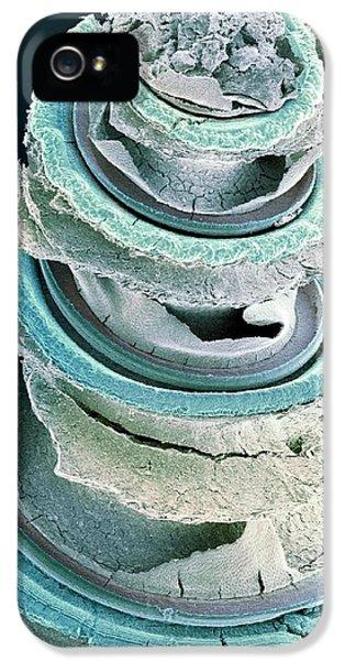 Organ iPhone 5 Cases - Organ Of Corti, Inner Ear, Sem iPhone 5 Case by Dr David Furness, Keele University