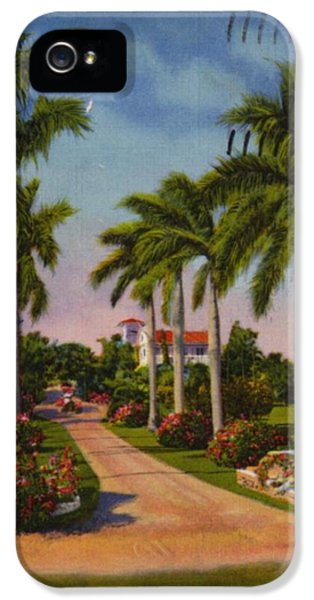 Bush iPhone 5 Cases - Palm Trees And Bushes Along Road iPhone 5 Case by Gillham Studios