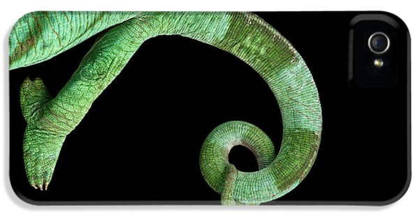 Parson Chameleon, Calumma Parsoni On Black Background, Top View IPhone 5 / 5s Case by Sergey Taran