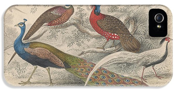Peacocks IPhone 5 / 5s Case by Oliver Goldsmith