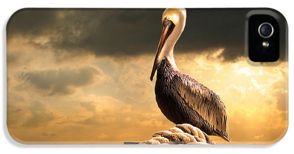 Pelican After A Storm IPhone 5 / 5s Case by Mal Bray