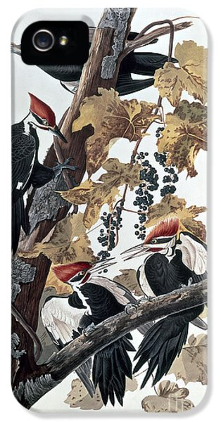 Pileated Woodpeckers IPhone 5 / 5s Case by John James Audubon