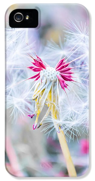 Calm iPhone 5 Cases - Pink Dandelion iPhone 5 Case by Parker Cunningham