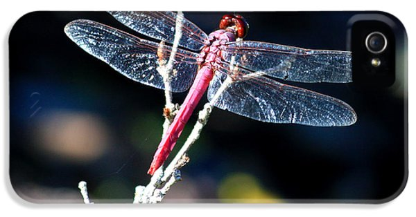 Sparking iPhone 5 Cases - Pink Dragonfly iPhone 5 Case by Carol Groenen