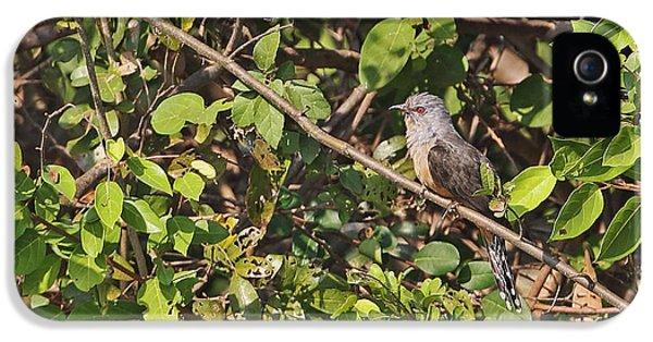 Plaintive Cuckoo IPhone 5 / 5s Case by Neil Bowman/FLPA
