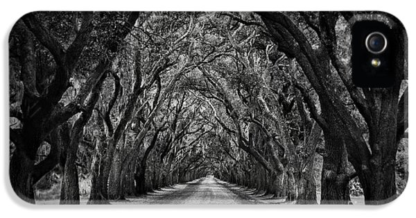 Plantation Oak Alley IPhone 5 / 5s Case by Perry Webster