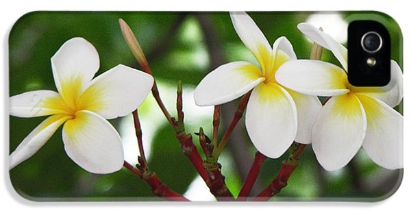 Yellow And White Plumeria Flower Frangipani iPhone 5 Cases - Plumeria after the rain iPhone 5 Case by Kathleen Wong