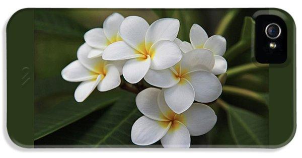 White Flowers iPhone 5 Cases - Plumeria - Golden Hearts iPhone 5 Case by Kerri Ligatich