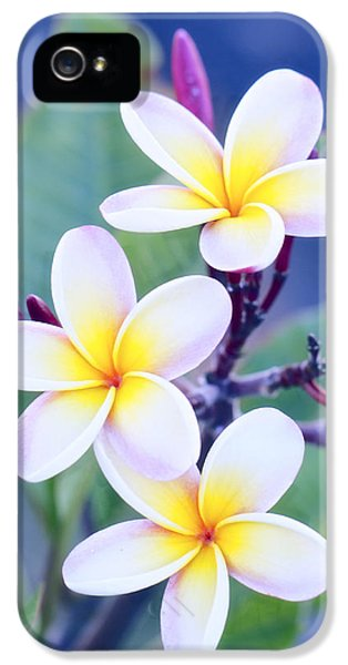 Plumeria In Pastels IPhone 5 / 5s Case by Jade Moon