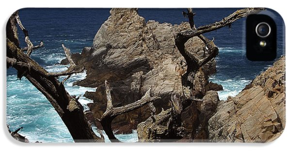 Coast iPhone 5 Cases - Point Lobos Rocks and Branches iPhone 5 Case by Charlene Mitchell
