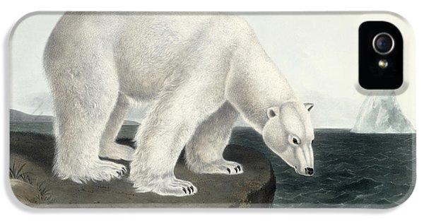 Polar Bear IPhone 5 / 5s Case by John James Audubon