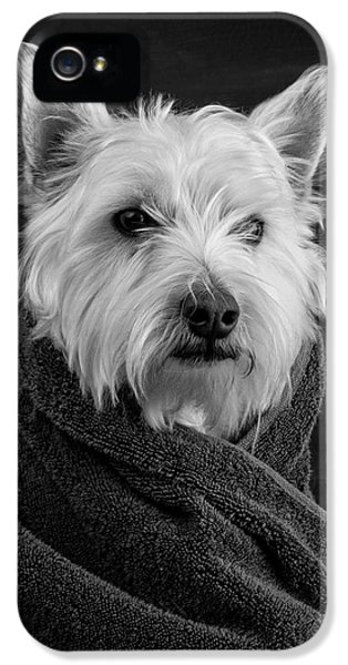 Calm iPhone 5 Cases - Portrait of a Westie Dog iPhone 5 Case by Edward Fielding