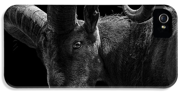 Portrait Of East Caucasian Tur In Black And White  IPhone 5 / 5s Case by Lukas Holas