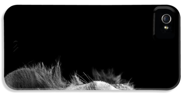 Beak iPhone 5 Cases - Portrait of Lion in black and white III iPhone 5 Case by Lukas Holas