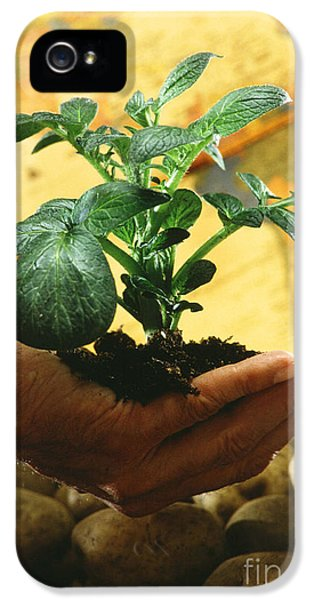 Potato Plant IPhone 5 / 5s Case by Science Source