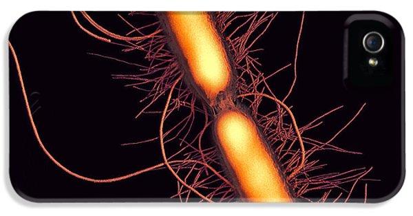 Scanning Electron Microscope iPhone 5 Cases - Proteus Vulgaris Bacteria, Sem iPhone 5 Case by Thomas Deerinck, Ncmir