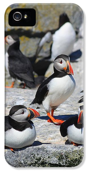 Puffins At Rest IPhone 5 / 5s Case by John Burk