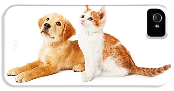 High Key iPhone 5 Cases - Puppy and Kitten Looking to Side iPhone 5 Case by Susan  Schmitz