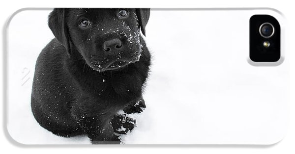 Puppy In The Snow IPhone 5 / 5s Case by Larry Marshall