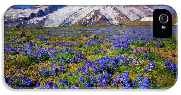 Rainier Lupines IPhone 5 / 5s Case by Inge Johnsson
