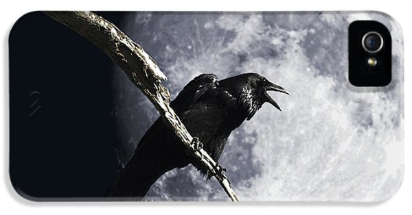Avian iPhone 5 Cases - Raven Barking at the Moon iPhone 5 Case by Wingsdomain Art and Photography