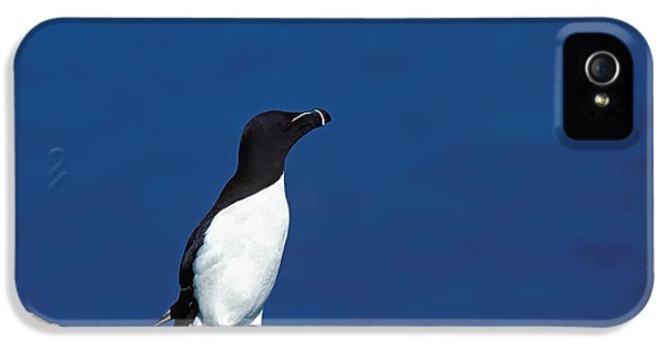 Razor-billed Auk Alca Torda IPhone 5 / 5s Case by Gerard Lacz