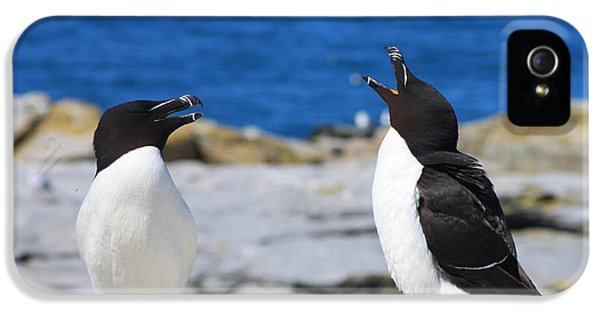 Razorbills Calling On Island IPhone 5 / 5s Case by John Burk