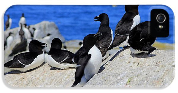Razorbills IPhone 5 / 5s Case by John Burk