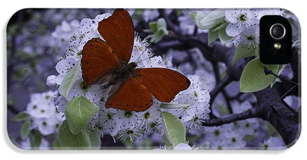 Arthropod iPhone 5 Cases - Red Butterfly On Cherry Blossoms iPhone 5 Case by Garry Gay