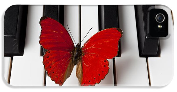 Red Butterfly On Piano Keys IPhone 5 / 5s Case by Garry Gay