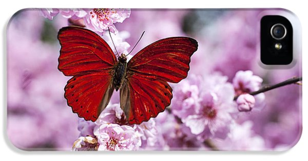 Red Butterfly On Plum  Blossom Branch IPhone 5 / 5s Case by Garry Gay